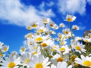 springtime4